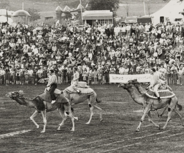 Super Saturday when Camel racing took place in Telford Town.