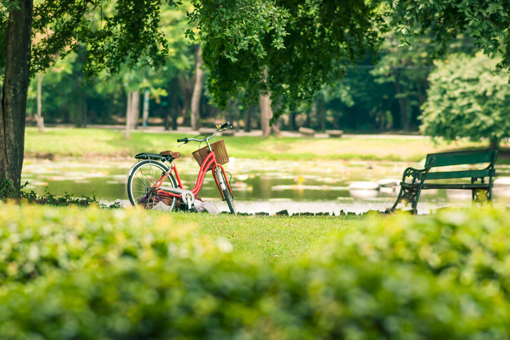 a picture of a bike in a park
